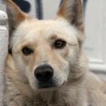 Valparaiso is vergeven van de honden